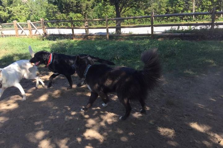 Pet Friendly Charlestown Ninigret Dog Park