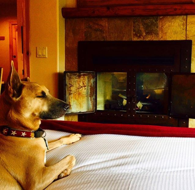Relaxing by the fire in one of Mountain Lodge's pet friendly rooms