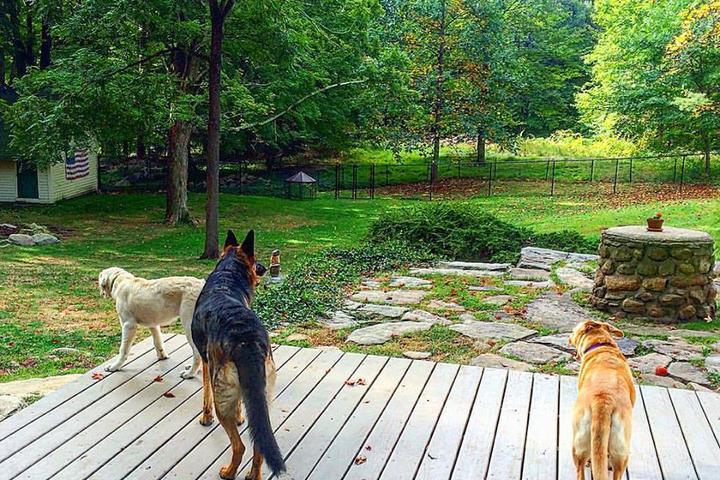 Pet Friendly South Salem Dog Farm