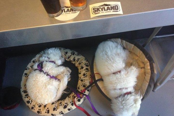 Dog Friendly Restaurants In Corona Ca Bring Fido