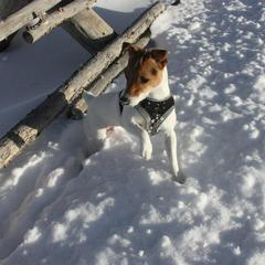 Jack in the Snow