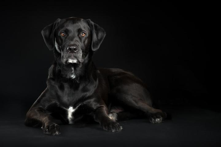 Pet Friendly Stacey Gammon Pet Photography