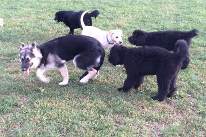 Pet Friendly Twinsburg Dog Park