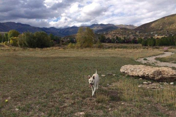 Pet Friendly Valais Dog Park