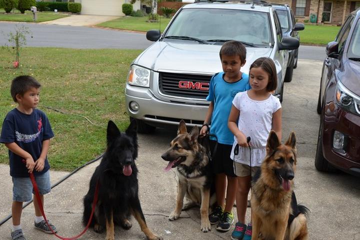 Pet Friendly Great Companion Dog Training