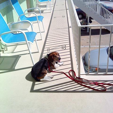 Linda Mar Beach Dog Friendly