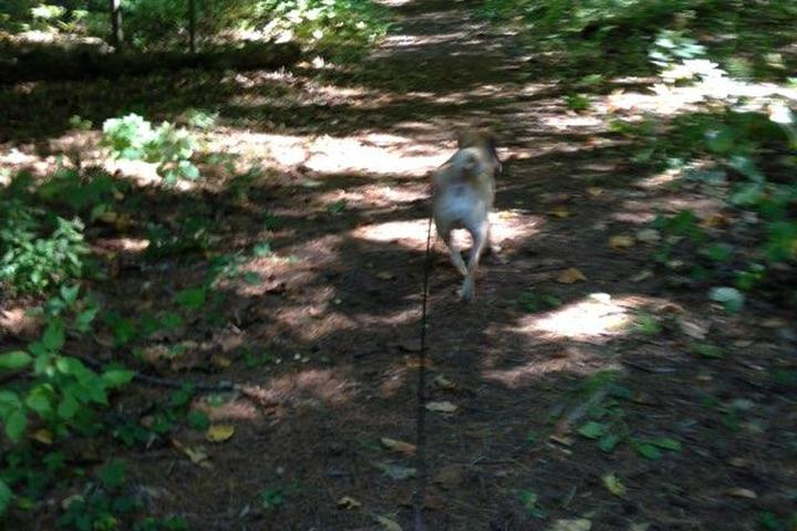 Pet Friendly October Mountain State Forest