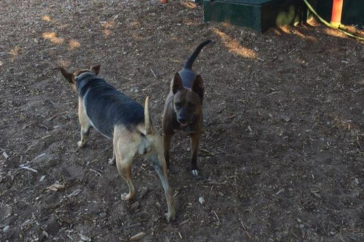 Pet Friendly Elm Street Dog Park