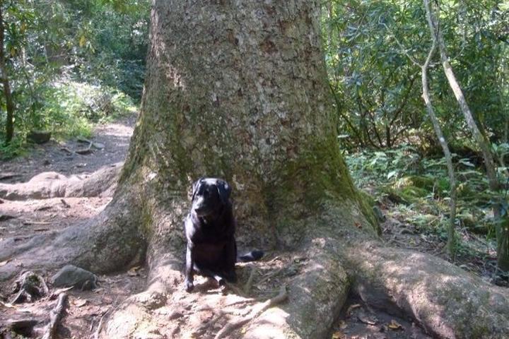 Pet Friendly Joyce Kilmer Memorial Trail