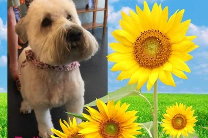Pet Friendly Paws In Paradise