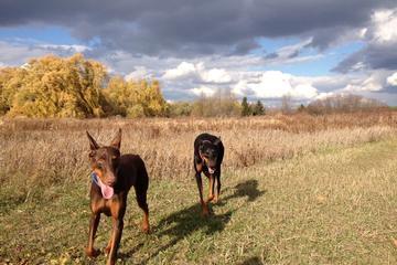 Pet Friendly Bronte Creek Provincial Park