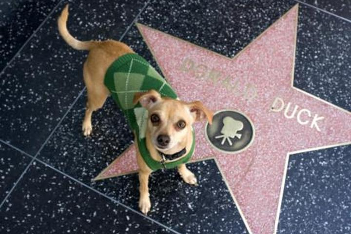 Pet Friendly Hollywood Walk of Fame
