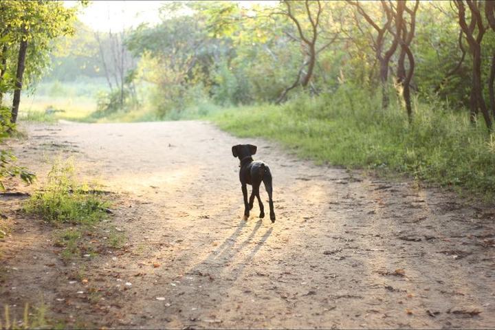Pet Friendly Stony Swamp Conservation Area