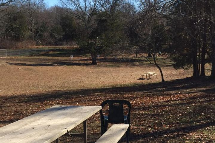 Pet Friendly Central Bark Dog Park at Copp Family Park