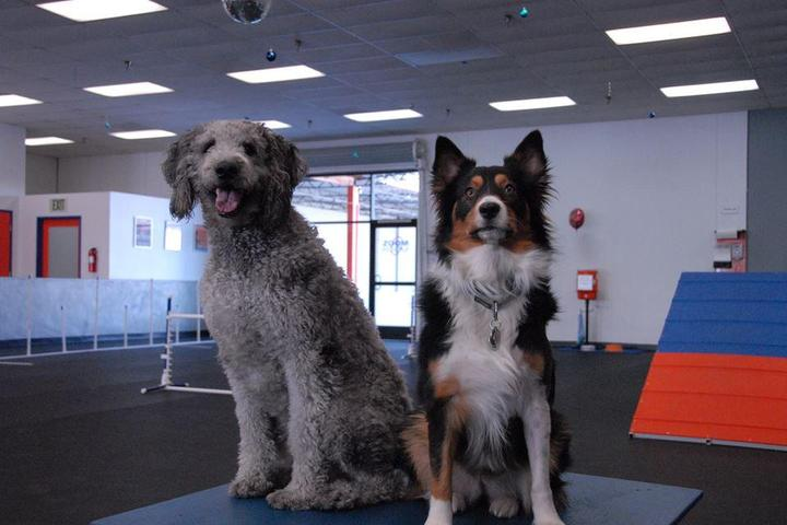 Pet Friendly Zoom Room Redondo Beach