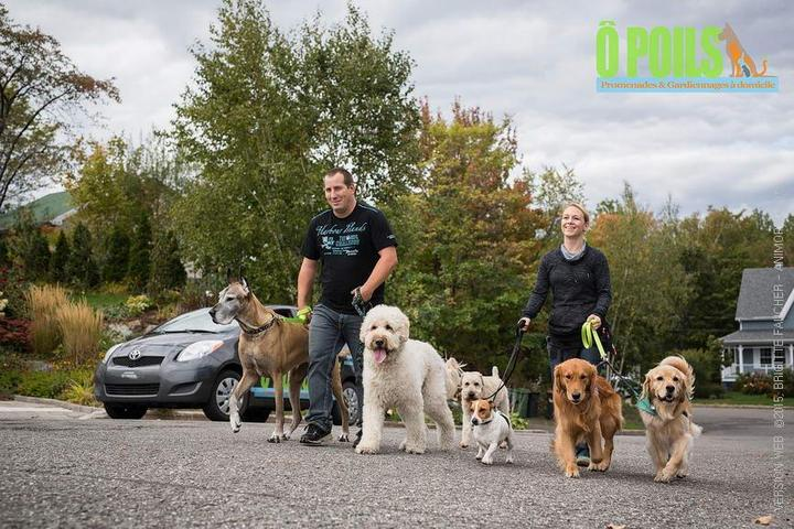 Pet Friendly Ô Poils, promenades et gardiennages à domicile