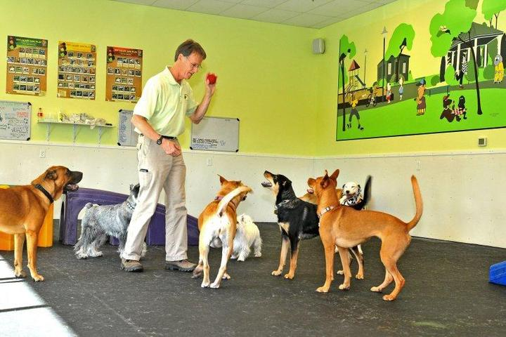 Pet Friendly Fit 'N' Furry Pet Resort and Training Center