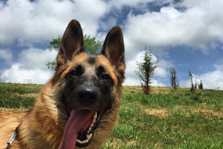 Pet Friendly Natural Lands Trust's Binky Lee Preserve