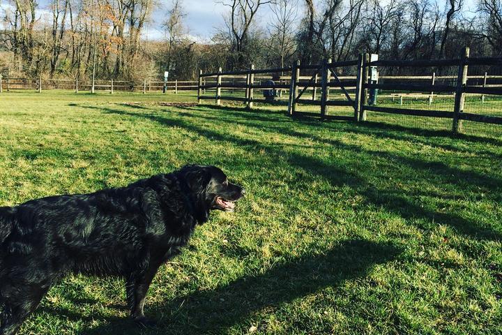Pet Friendly Polk Valley Dog Park