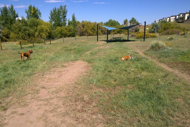 Pet Friendly Digger's Dog Park at Dad Clark