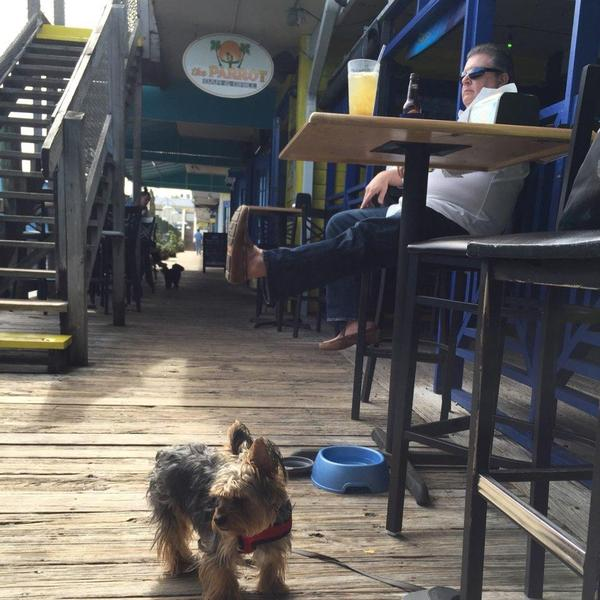Is Sharky S On The Pier Dog Friendly