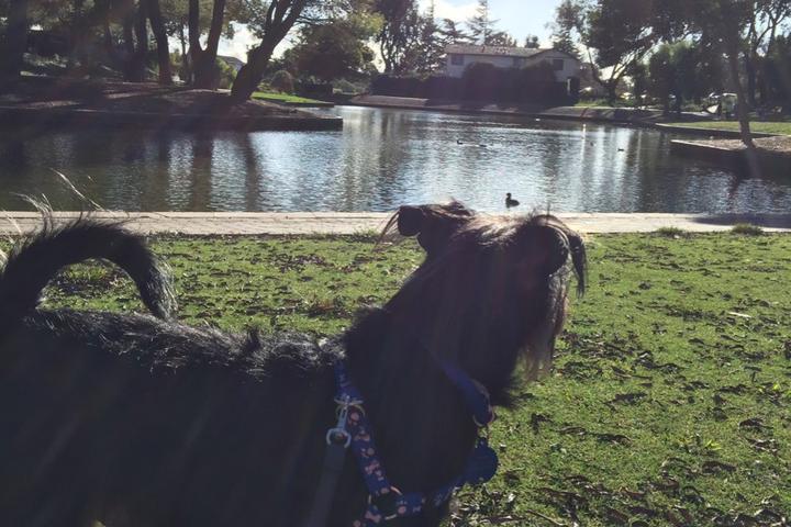 Pet Friendly Lakeshore Park