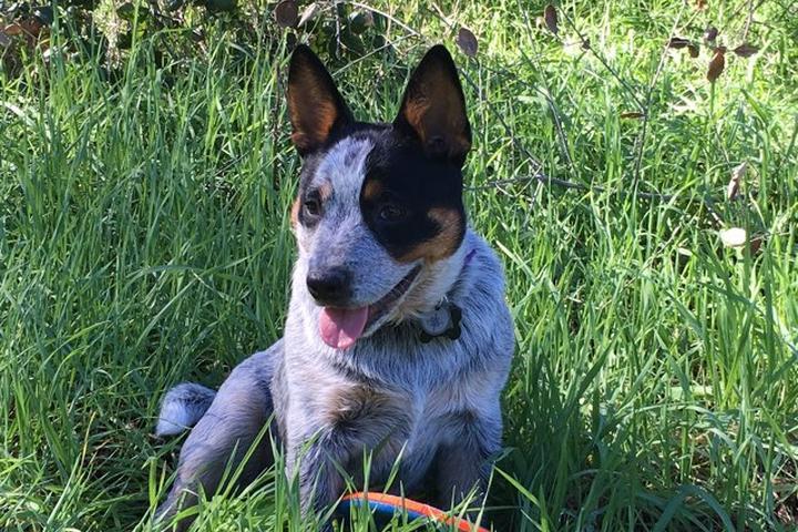 Dog Friendly Hiking Trails In Carlsbad Ca