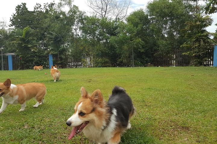 Pet Friendly PamperPup Pet Home-Boarding & Daycare
