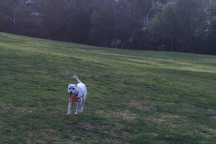 Pet Friendly Brengle Terrace Park