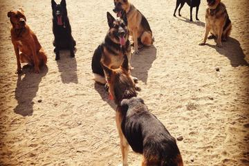 Pet Friendly Laurel Canyon Off Leash Dog Park