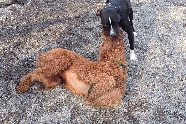 Pet Friendly Cooper River Dog Park