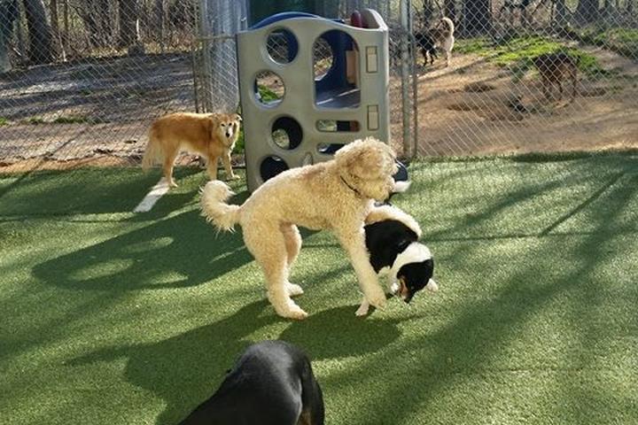 Pet Friendly Chapel Hill Pet Resort