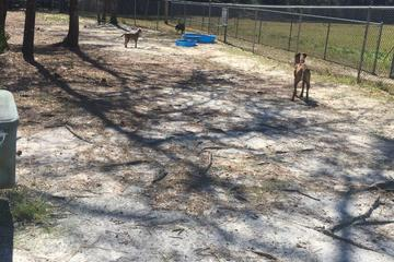 Pet Friendly Zollie Young Dog Park