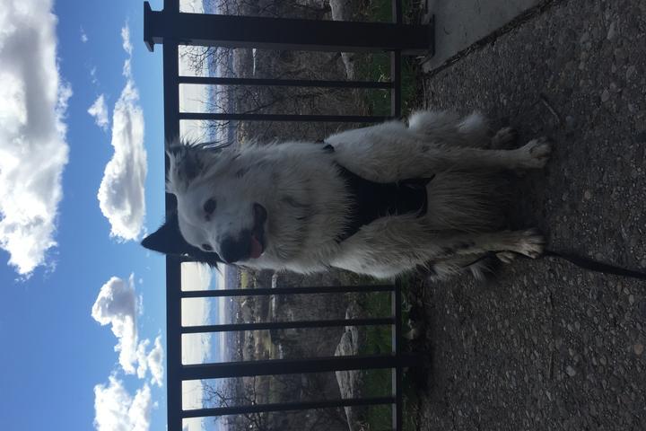 Dog Owner's Guide to Layton, UT