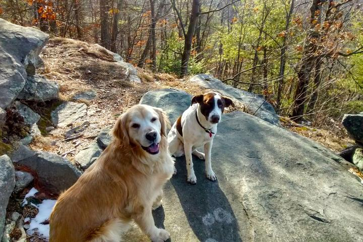 Pet Friendly Amethyst Brook Conservation Area