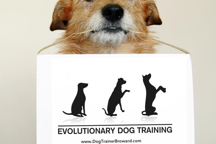 Pet Friendly Evolutionary Dog Training, LLC