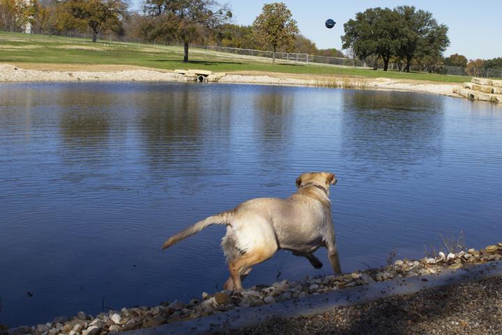 Pet Friendly ZBonz Dog Park