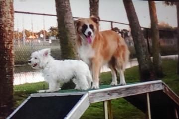 Pet Friendly Happy Tails Dog Park at Seminole Park