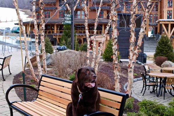 dog friendly stowe vt