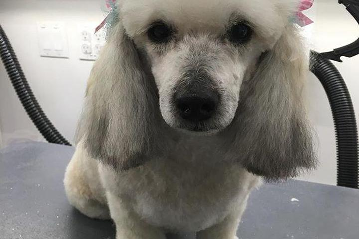 Pet Friendly Colleens Mobile Pet Spa