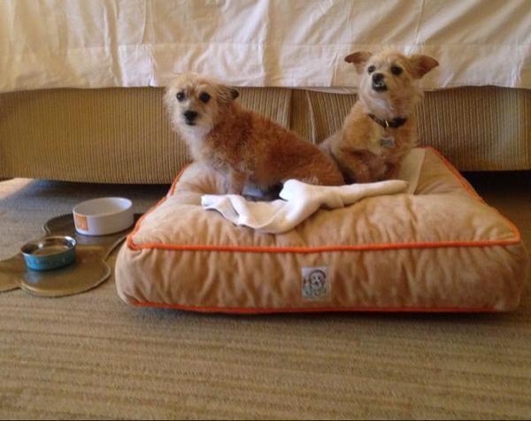 Dog Friendly Restaurants Scottsdale Az