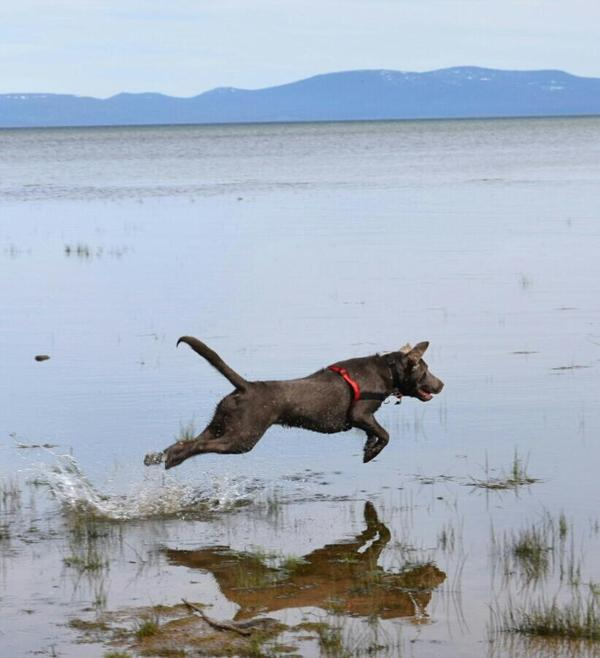 South Lake Tahoe Restaurants Dog Friendly