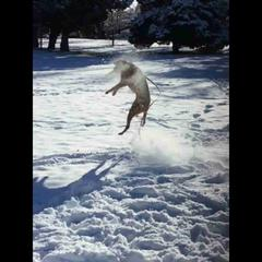 Catching discs on a snow day