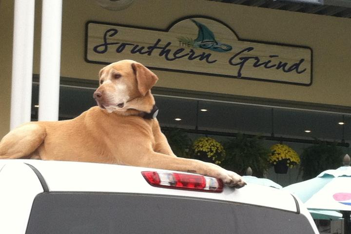 Pet Friendly The Southern Grind Coffee House