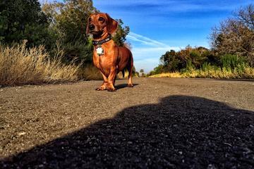 Pet Friendly Refugio State Beach to El Capitan State Beach Trail