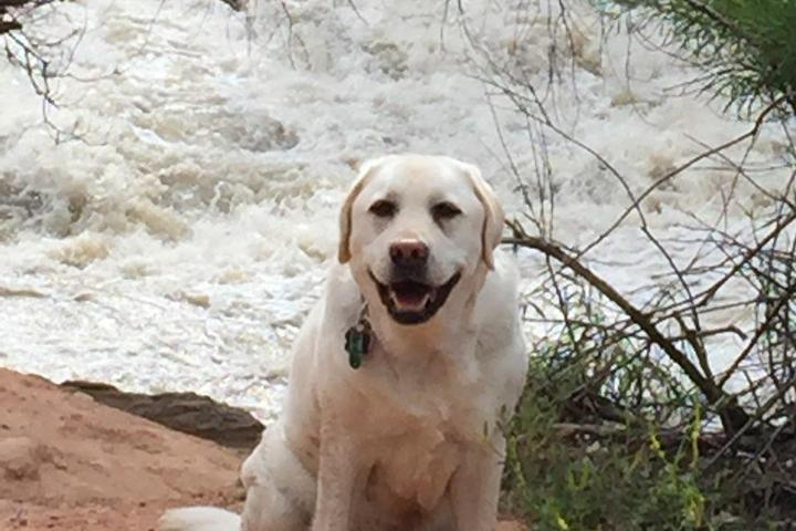 Pet Friendly Pa'rus Trail