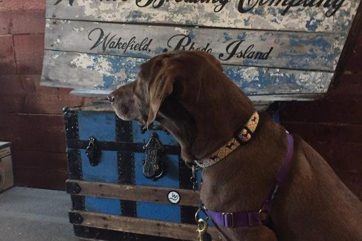 Pet Friendly Whaler's Brewing Company