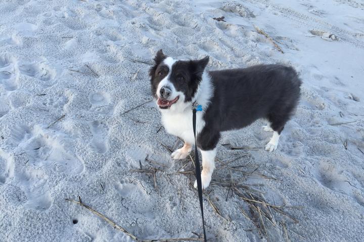 Pet Friendly Atlantic Beach
