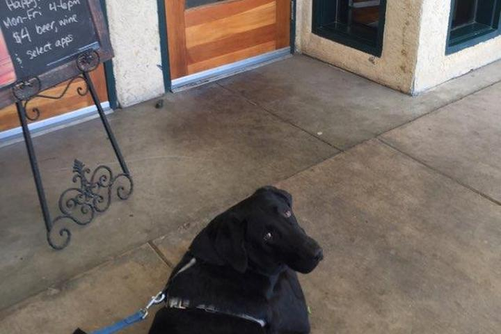 Pet Friendly The Pint House Bar & Grill