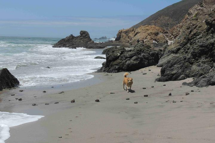 Dog Owner's Guide to Big Sur, CA